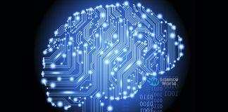 Harmful Activities for Brain