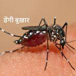 डेंगू बुख़ार एडीज इजिप्टी