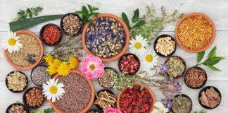 औषधीय पौधे