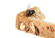 बरसात में मक्खियाँ दूर भगाएँ