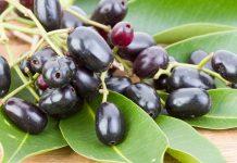 जामुन के फल