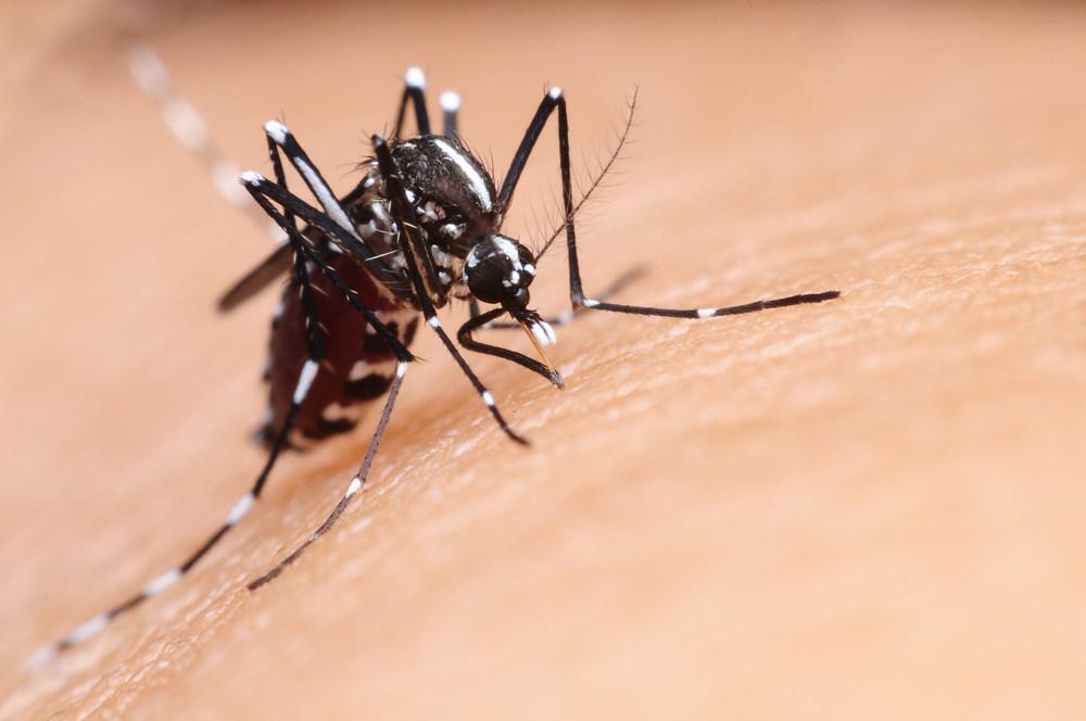 मलेरिया बुखार
