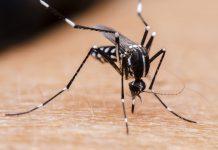 मलेरिया से बचने की जानकारी