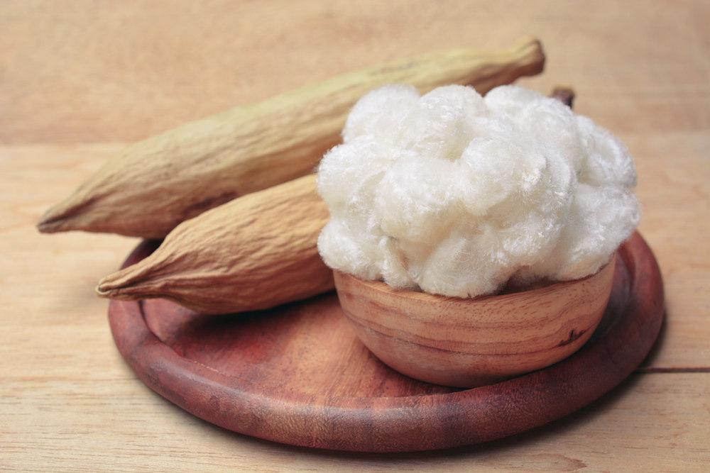 Semal - Silk Cotton Fruit