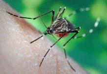 मच्छर भगाने के उपाय