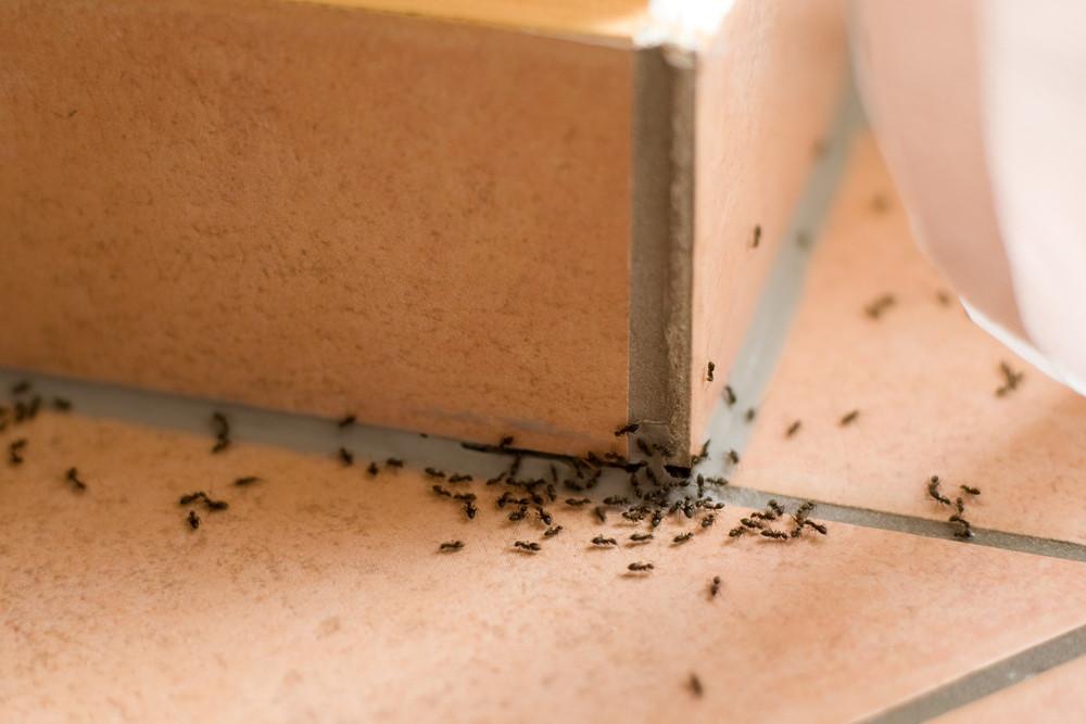 Get rid of ants - Keep ants away